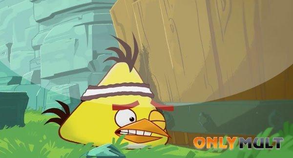 Третий скриншот Злые птицы