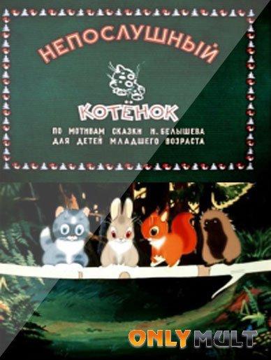 Poster Непослушный котенок