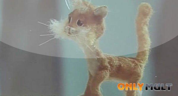 Первый скриншот Рыжая кошка