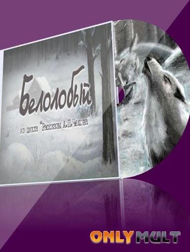 Poster Белолобый