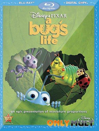 Poster Жизнь жуков