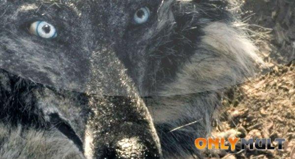 Второй скриншот Петя и волк