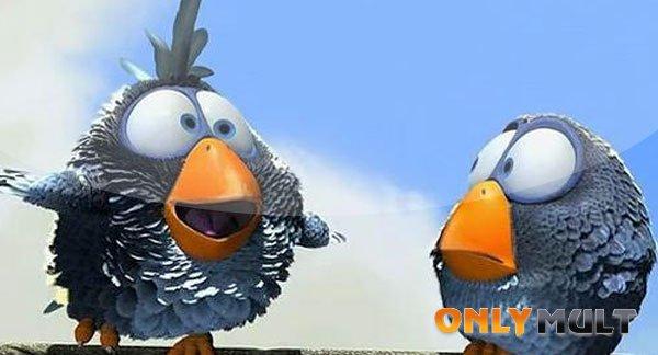Третий скриншот О птичках