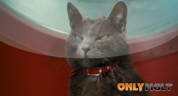 Третий скриншот Кошки против собак: Месть Китти Галор