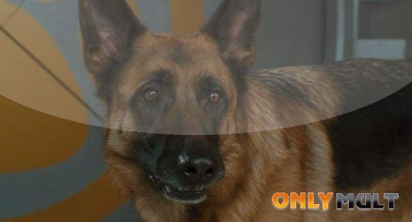 Первый скриншот Кошки против собак: Месть Китти Галор