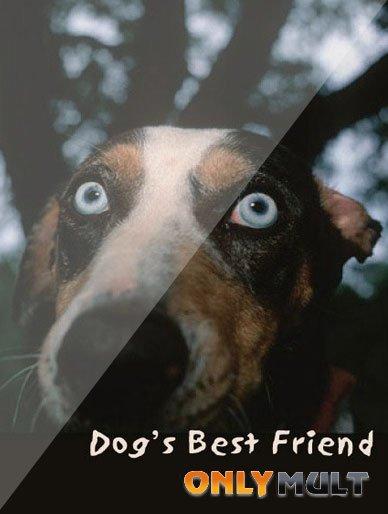 Poster Лучший друг собак