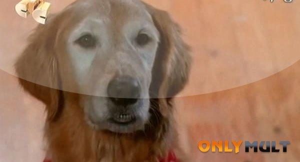 Второй скриншот Лучший друг собак