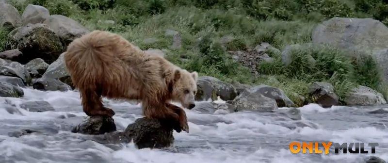 Третий скриншот Земля медведей