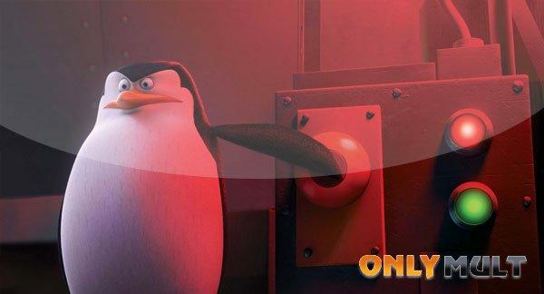 Первый скриншот Пингвины Мадагаскара (2014)