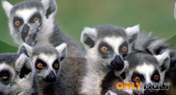Третий скриншот Остров лемуров Мадагаскар