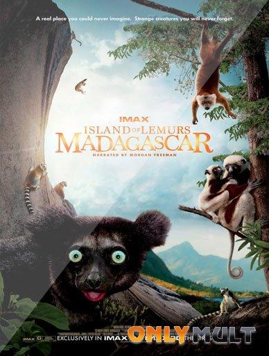Poster Остров лемуров Мадагаскар