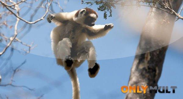 Первый скриншот Остров лемуров Мадагаскар