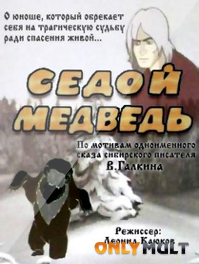 Poster Седой медведь