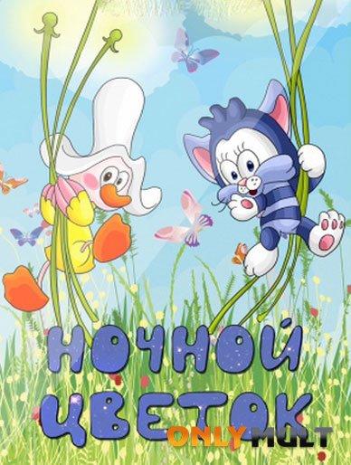 Poster Ночной цветок