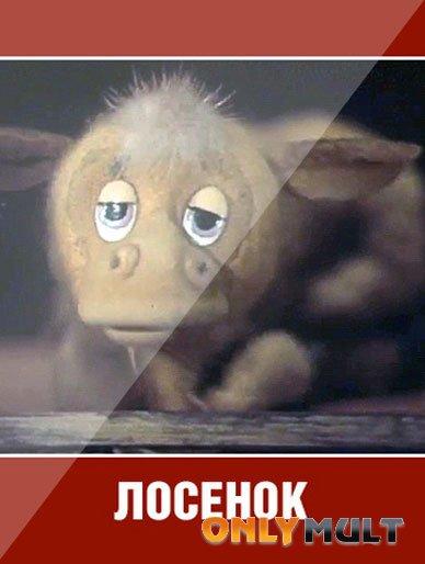 Poster Лосенок