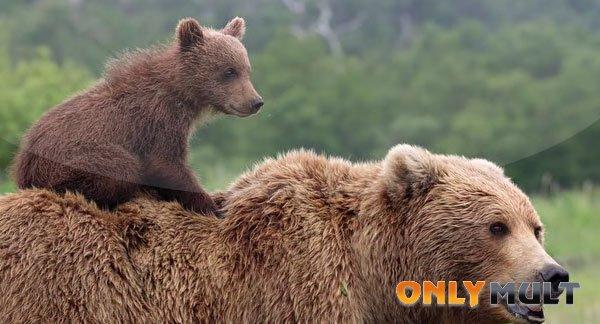 Первый скриншот Медведи (2014)