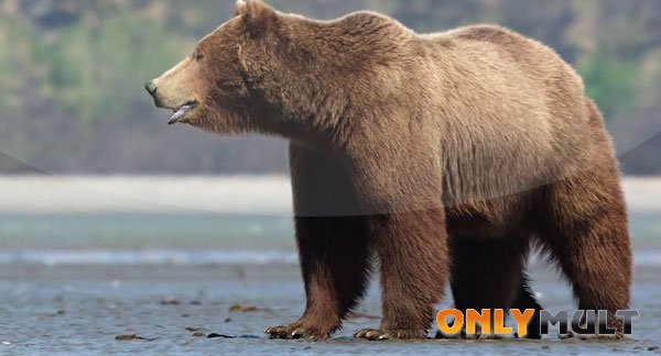 Второй скриншот Медведи (2014)