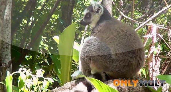 Второй скриншот Мадагаскар 3D [2014]