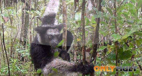 Третий скриншот Мадагаскар 3D [2014]