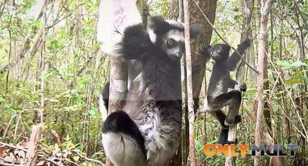 Первый скриншот Мадагаскар 3D [2014]