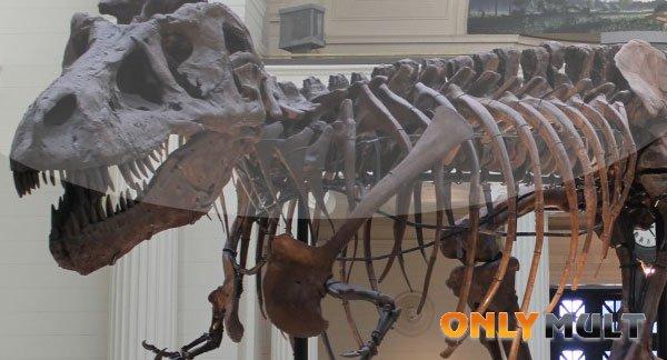 Второй скриншот Динозавр 13