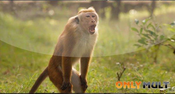 Второй скриншот Королевство обезьян (2015)